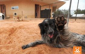 Traveler high five dog