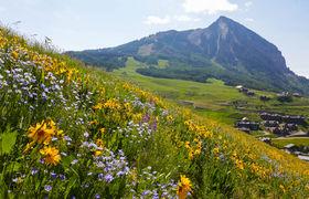 Butte wildflowers