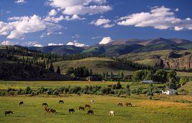 4ur 14 horses in valley 1