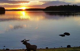 Moose sunrise