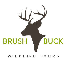 BrushBuck Guide Services Logo