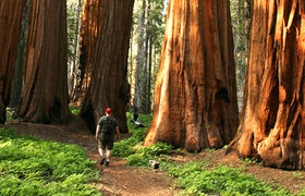 Interior header image man hiking giant sequoia 960x410