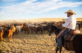 Bar w cattle dr sept 12 dn 1260 2